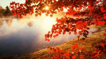 fall-leaves-hd-wallpapers-fall-leaves-hd-wallpaper-rainbow-wallpapers-1080p-for-mac-ipad-free-iphone-water-rain